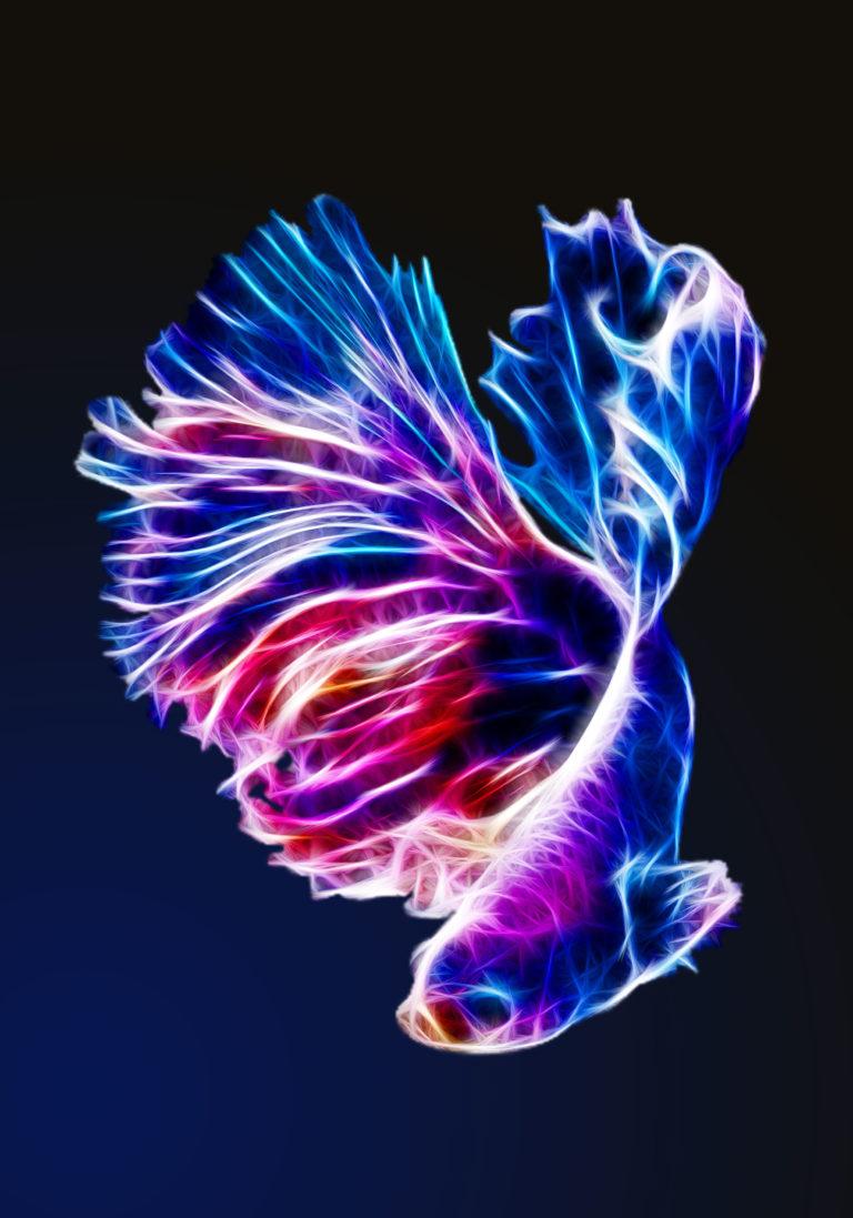 Fish_Poster