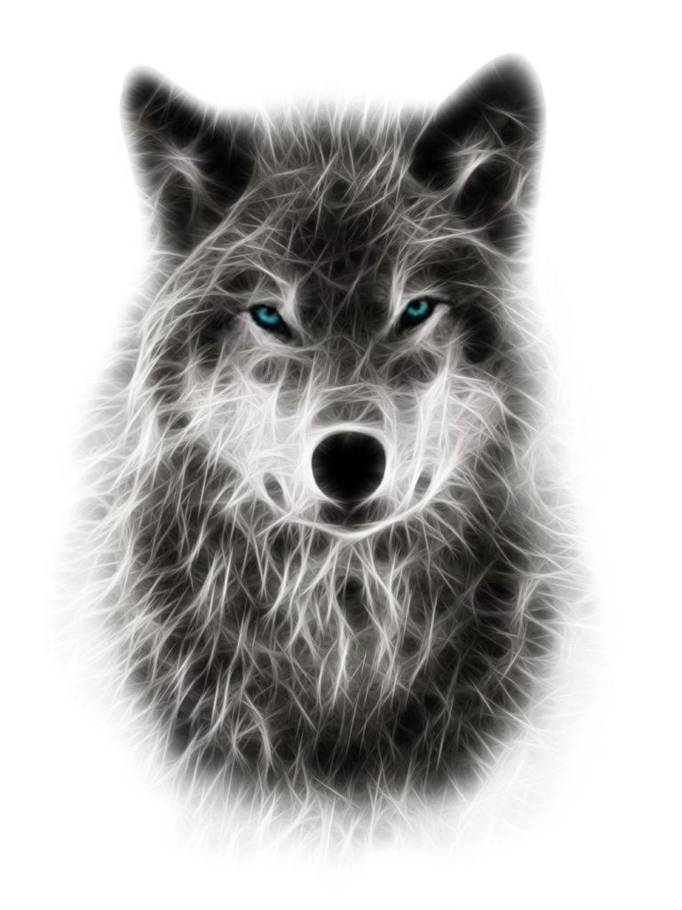 wolf_white